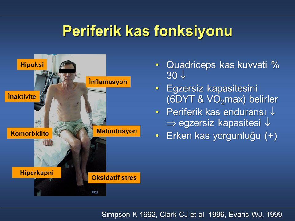 Periferik kas fonksiyonu