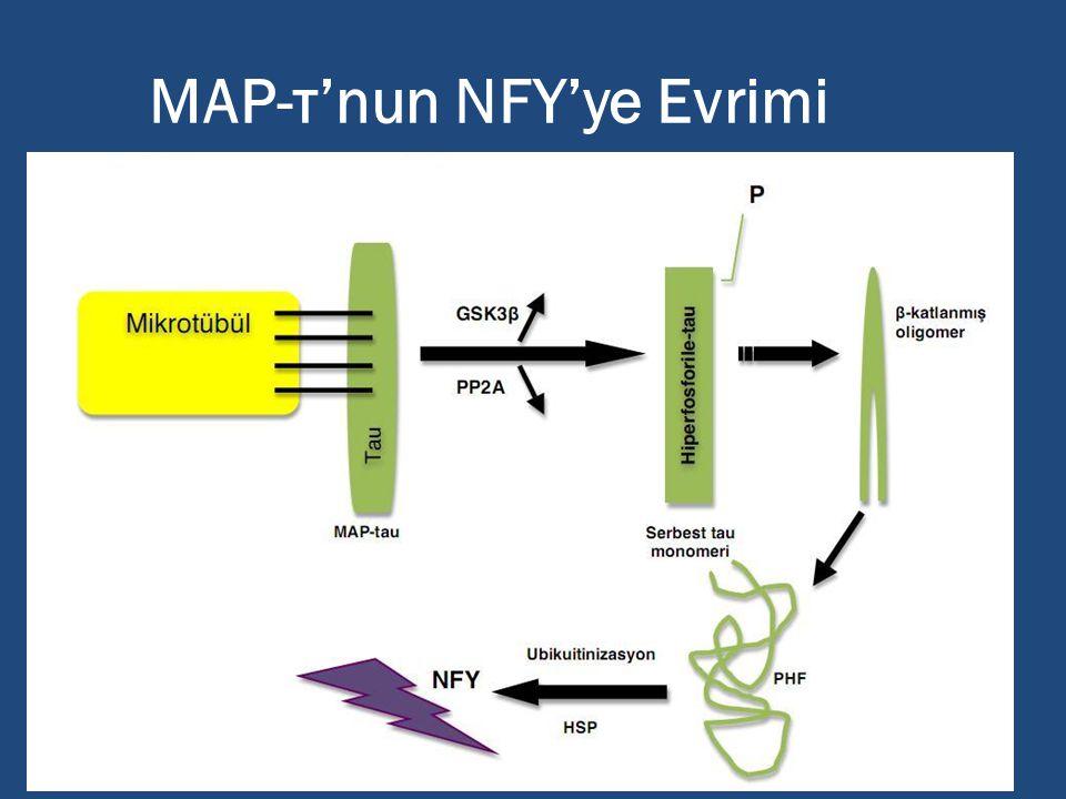 MAP-τ'nun NFY'ye Evrimi