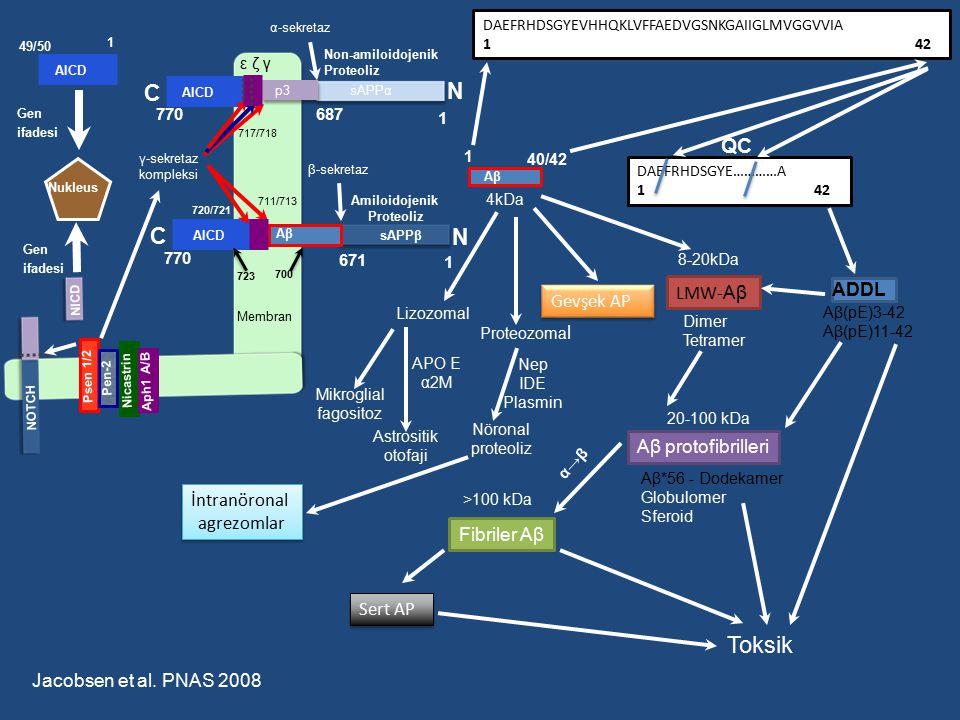Toksik C N C N QC LMW-Aβ ADDL Gevşek AP Aβ protofibrilleri