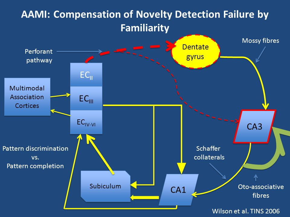 AAMI: Compensation of Novelty Detection Failure by Familiarity