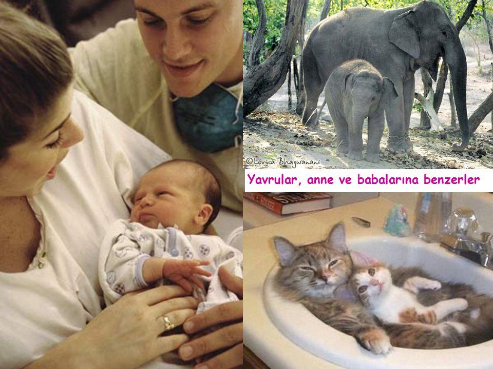 Yavrular, anne ve babalarına benzerler