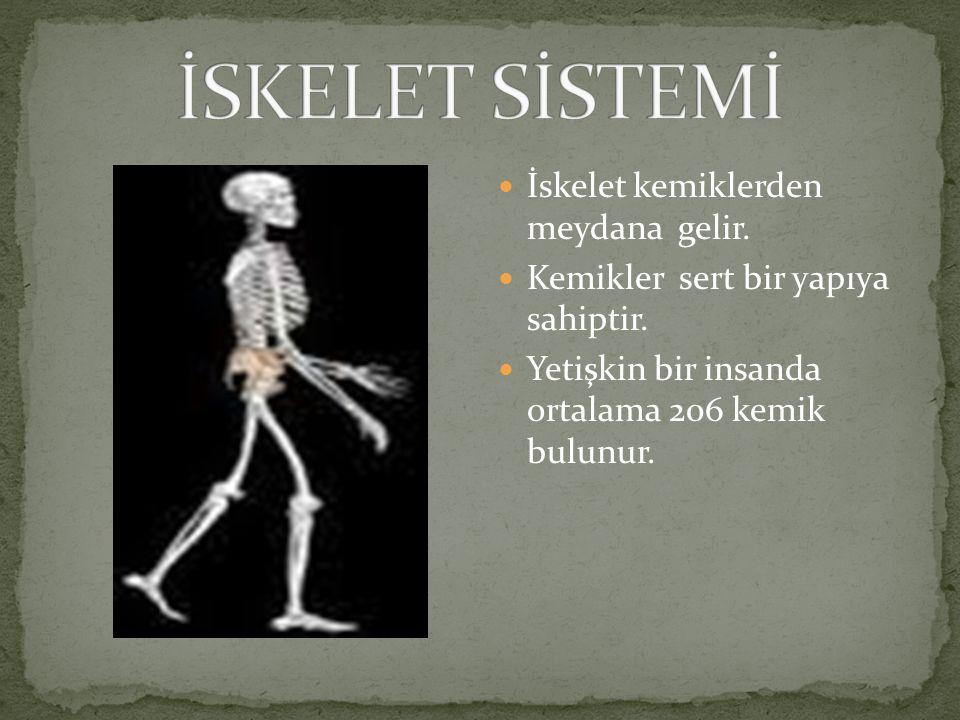 İSKELET SİSTEMİ İskelet kemiklerden meydana gelir.