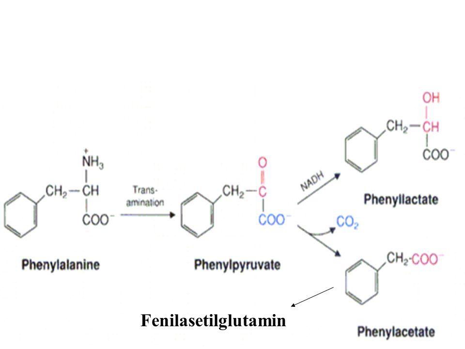Fenilpiruvat aslında daha çok fenillaktat ve
