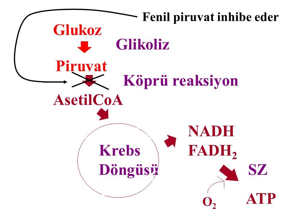 Glukoz Glikoliz Piruvat Köprü reaksiyon AsetilCoA C6 NADH FADH2 C4
