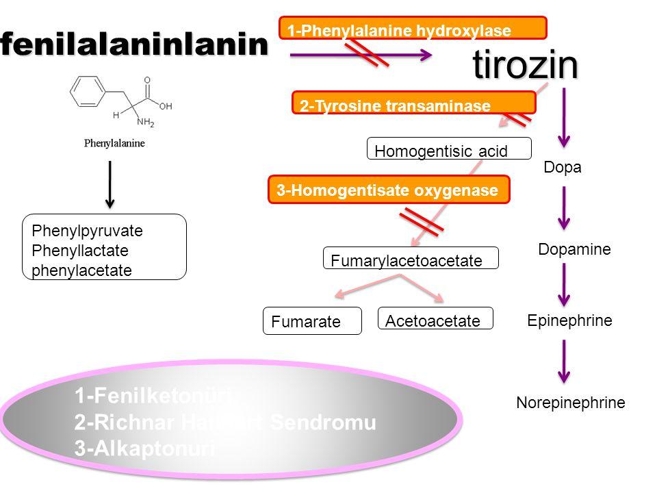 tirozin fenilalaninlanin 1-Fenilketonüri. 2-Richnar Hanhart Sendromu
