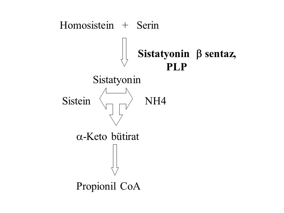 Homosistein + Serin Sistatyonin  sentaz, PLP. Sistatyonin. Sistein. NH4. -Keto bütirat.