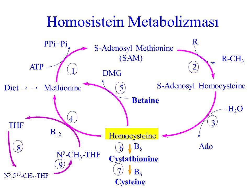 Homosistein Metabolizması