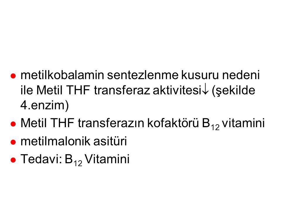 metiyonin sentaz (Metil THF transferaz (tip 3)