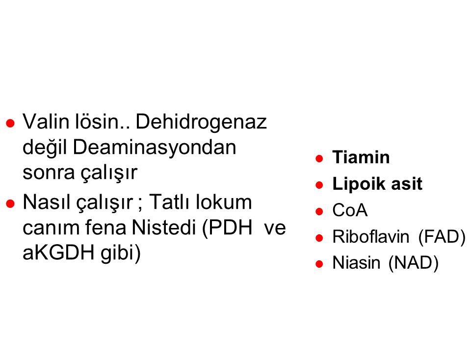 Dallı zincirli aa dehidrogenaz kompleksi