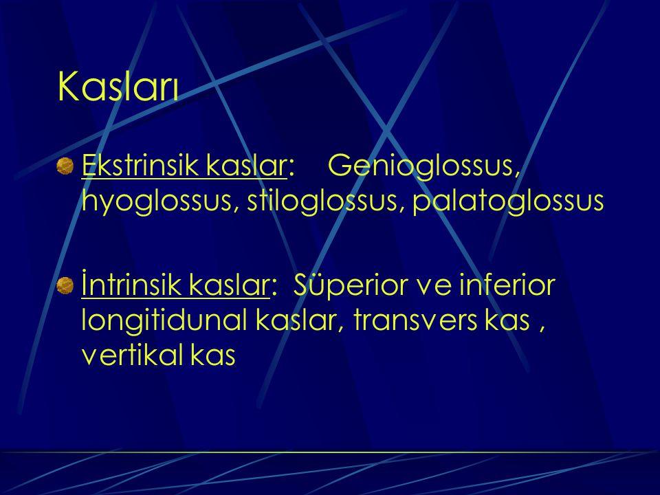 Kasları Ekstrinsik kaslar: Genioglossus, hyoglossus, stiloglossus, palatoglossus.