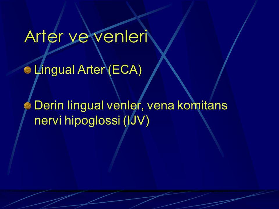 Arter ve venleri Lingual Arter (ECA)