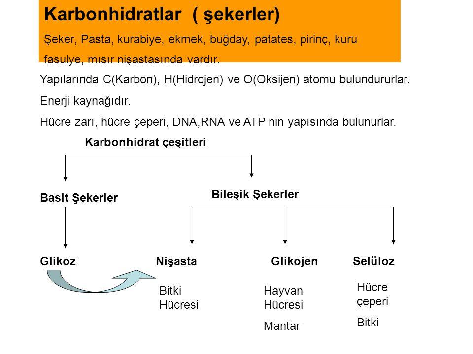 Karbonhidratlar ( şekerler)