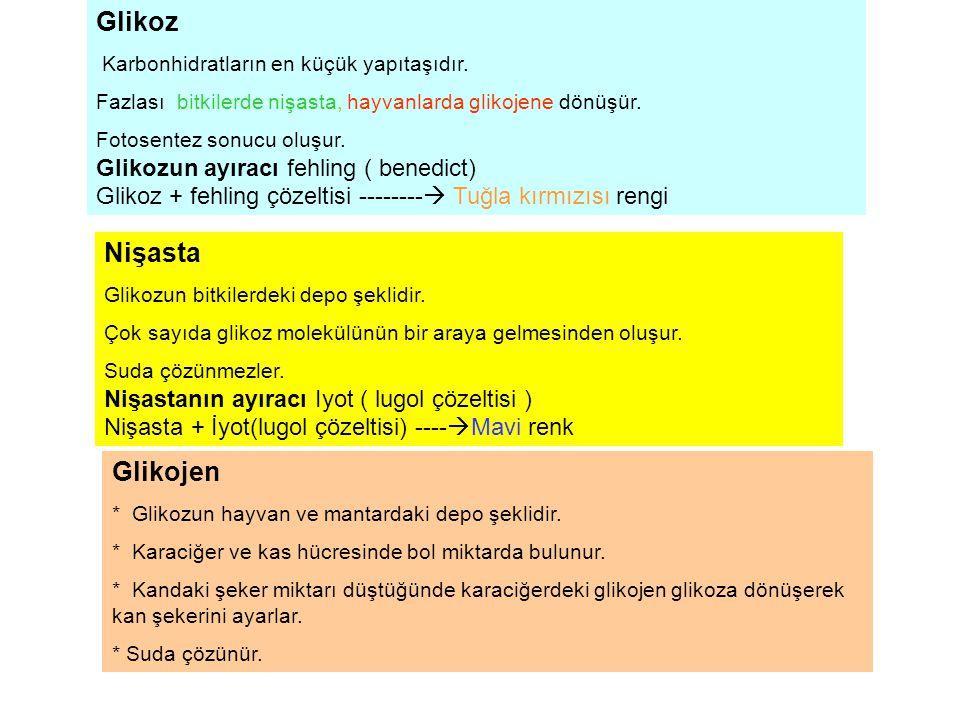 Glikoz Nişasta Glikojen Glikozun ayıracı fehling ( benedict)