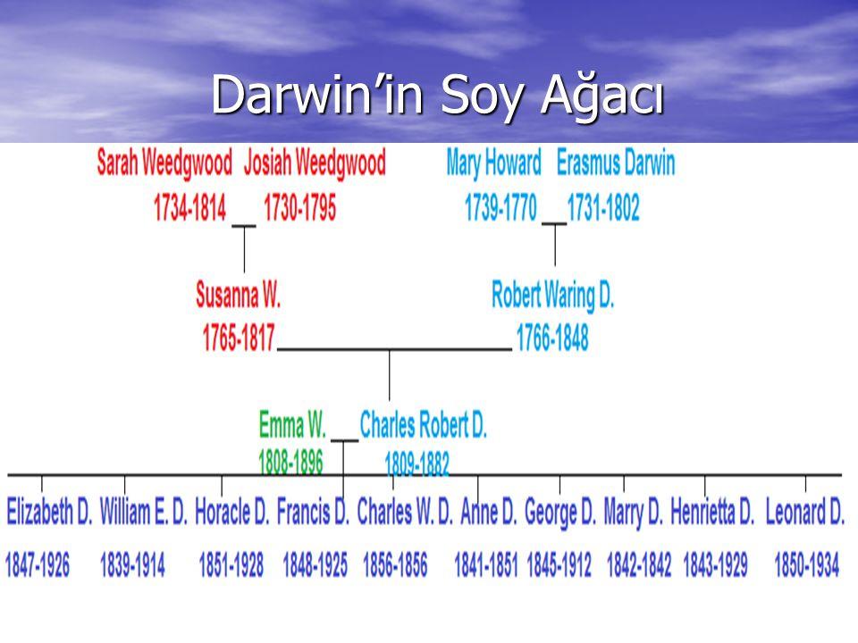 Darwin'in Soy Ağacı