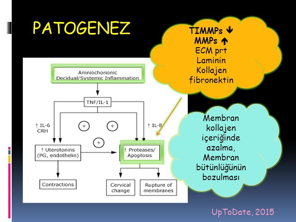 PATOGENEZ koryodesidual enfeksiyon/ enflamasyon,