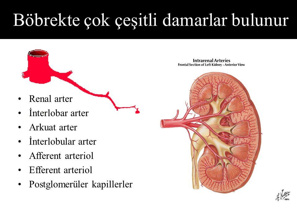 Böbrekte çok çeşitli damarlar bulunur
