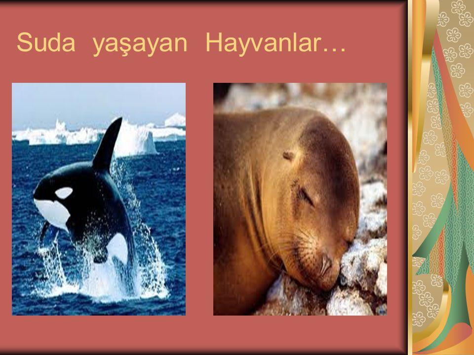 Suda yaşayan Hayvanlar…