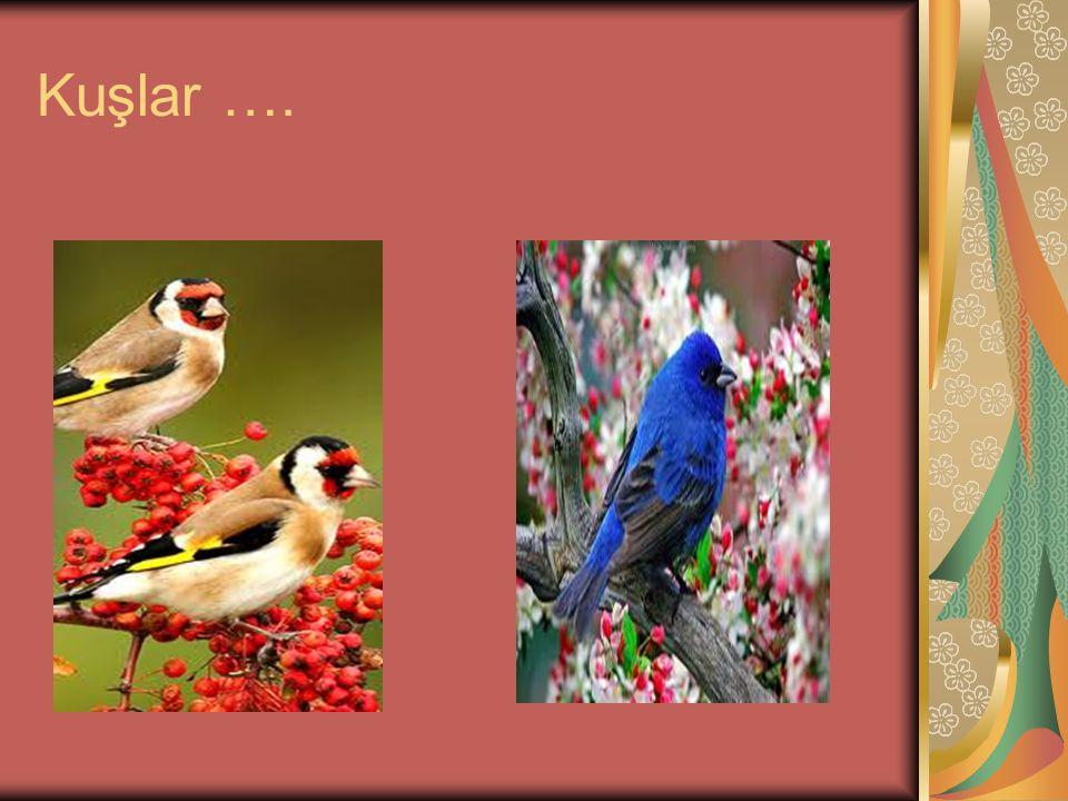 Kuşlar ….