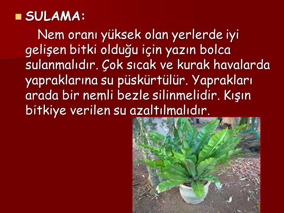 SULAMA: