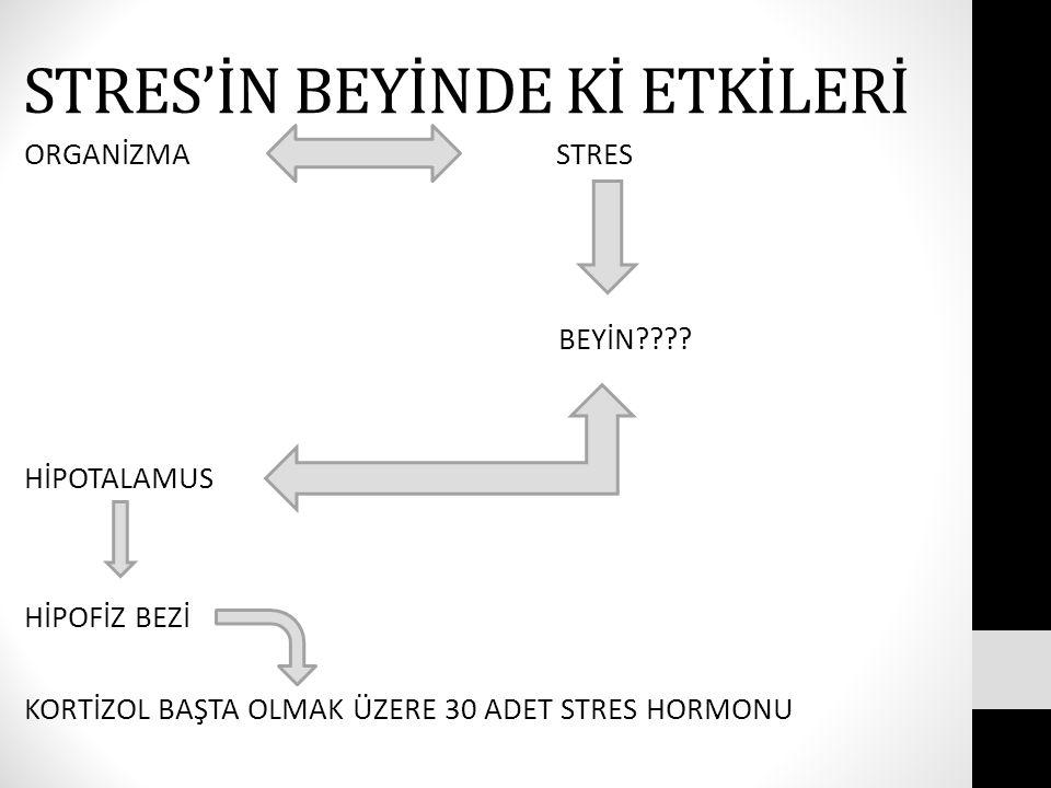 STRES'İN BEYİNDE Kİ ETKİLERİ