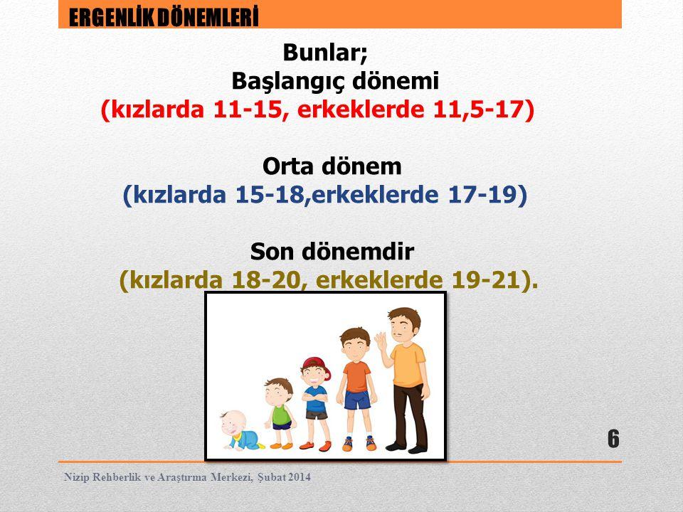 (kızlarda 11-15, erkeklerde 11,5-17) Orta dönem
