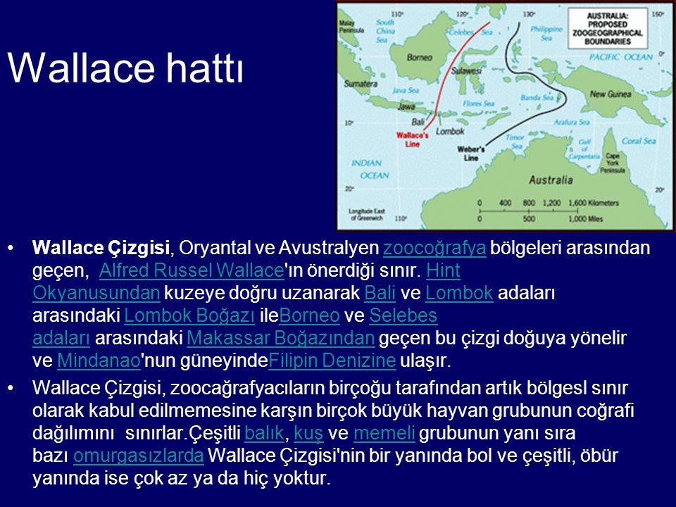 Wallace hattı