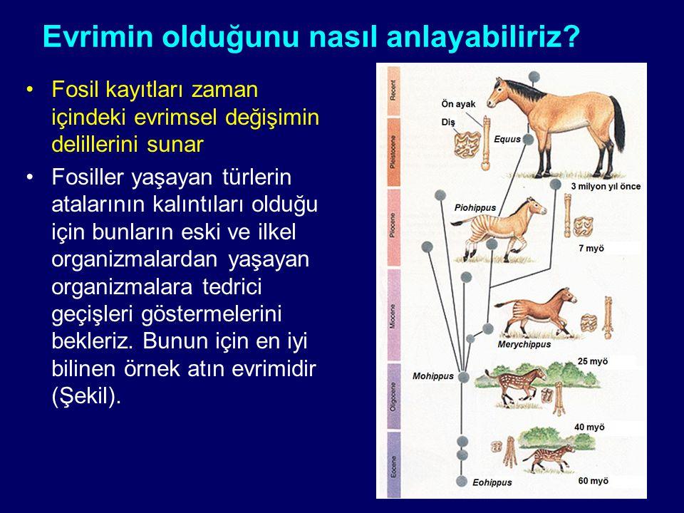 Evrimin olduğunu nasıl anlayabiliriz