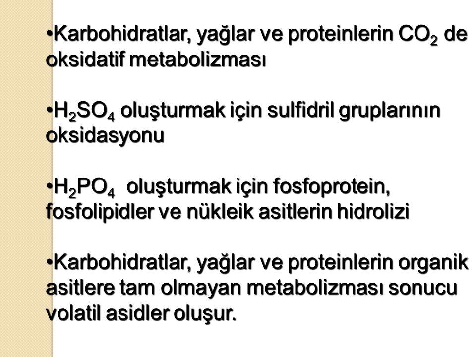 Karbohidratlar, yağlar ve proteinlerin CO2 de oksidatif metabolizması