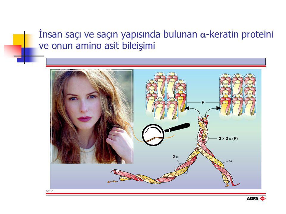 İnsan saçı ve saçın yapısında bulunan a-keratin proteini ve onun amino asit bileişimi