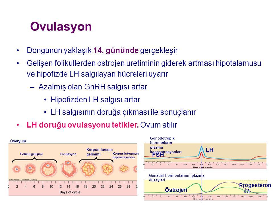 Ovulasyon Döngünün yaklaşık 14. gününde gerçekleşir