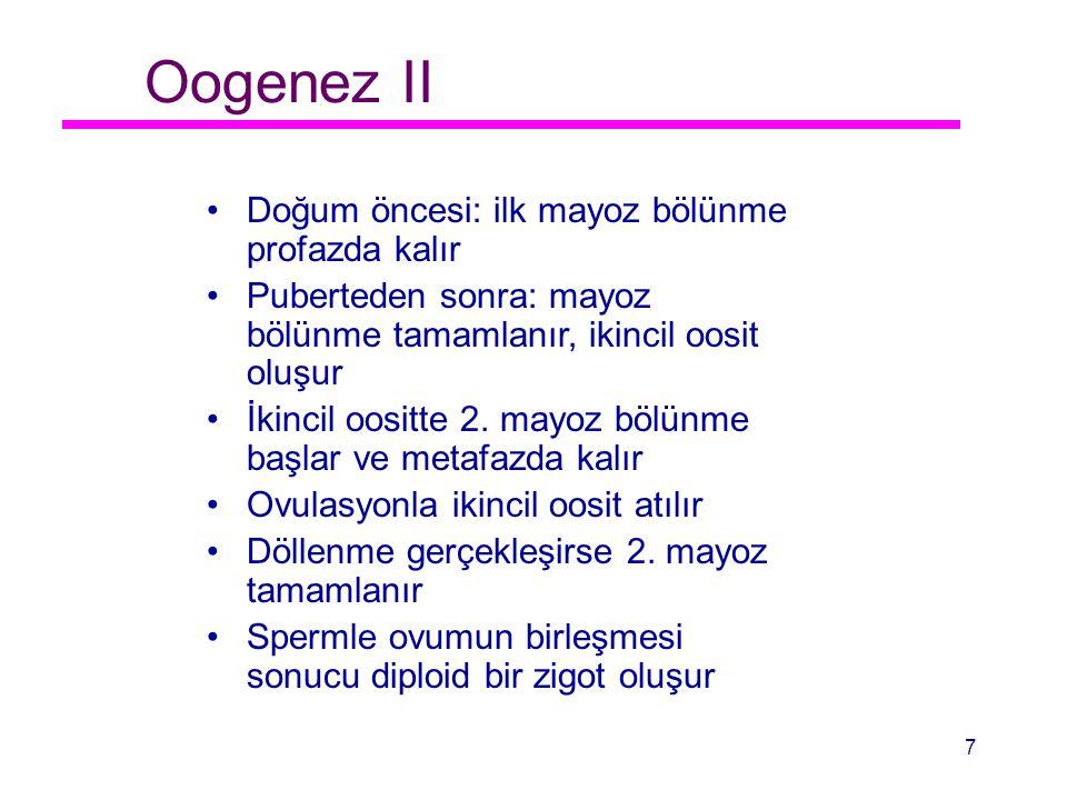 Oogenez II Doğum öncesi: ilk mayoz bölünme profazda kalır