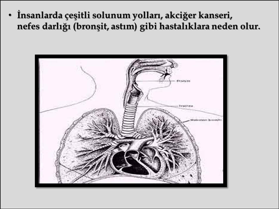 İnsanlarda çeşitli solunum yolları, akciğer kanseri, nefes darlığı (bronşit, astım) gibi hastalıklara neden olur.