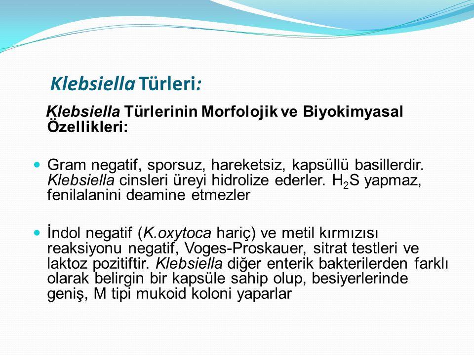 Klebsiella Türleri: Klebsiella Türlerinin Morfolojik ve Biyokimyasal Özellikleri: