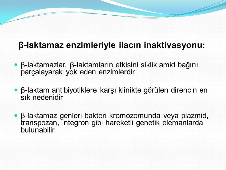 β-laktamaz enzimleriyle ilacın inaktivasyonu: