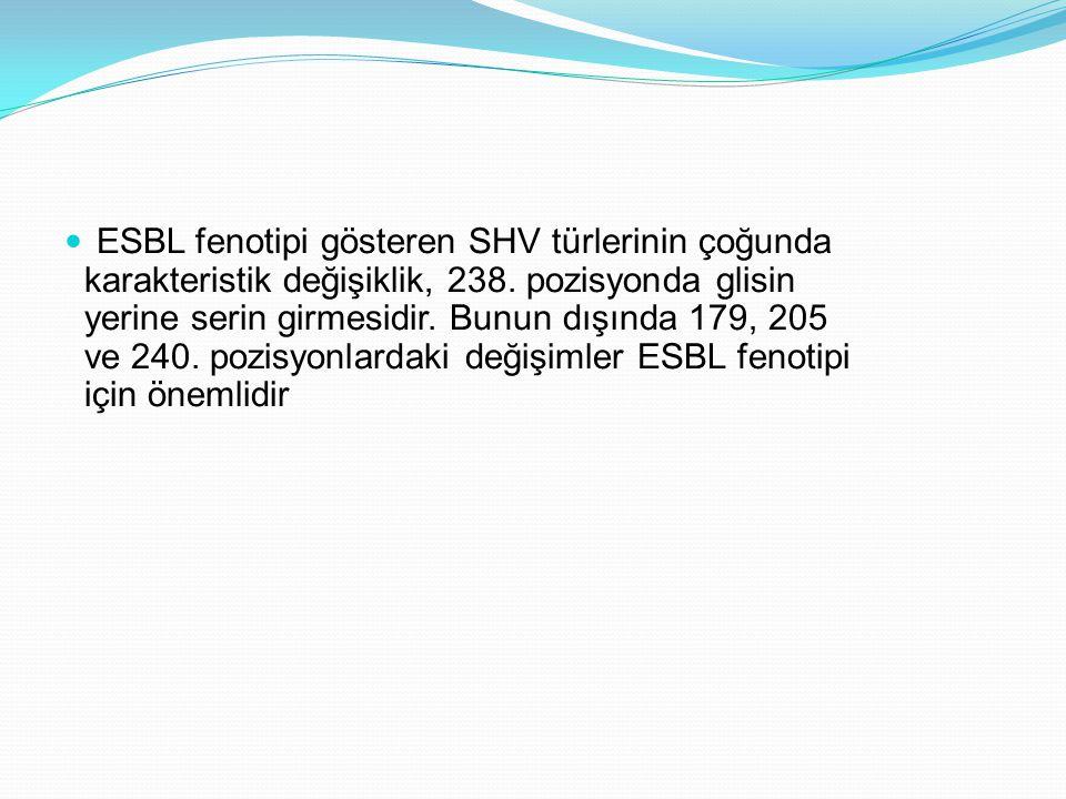 ESBL fenotipi gösteren SHV türlerinin çoğunda