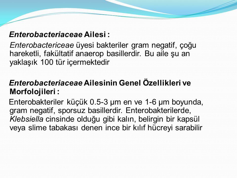 Enterobacteriaceae Ailesi : Enterobactericeae üyesi bakteriler gram negatif, çoğu hareketli, fakültatif anaerop basillerdir.