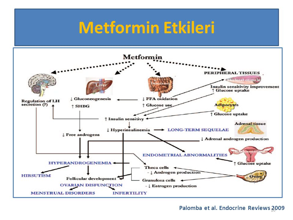 Metformin Etkileri Palomba et al. Endocrine Reviews 2009