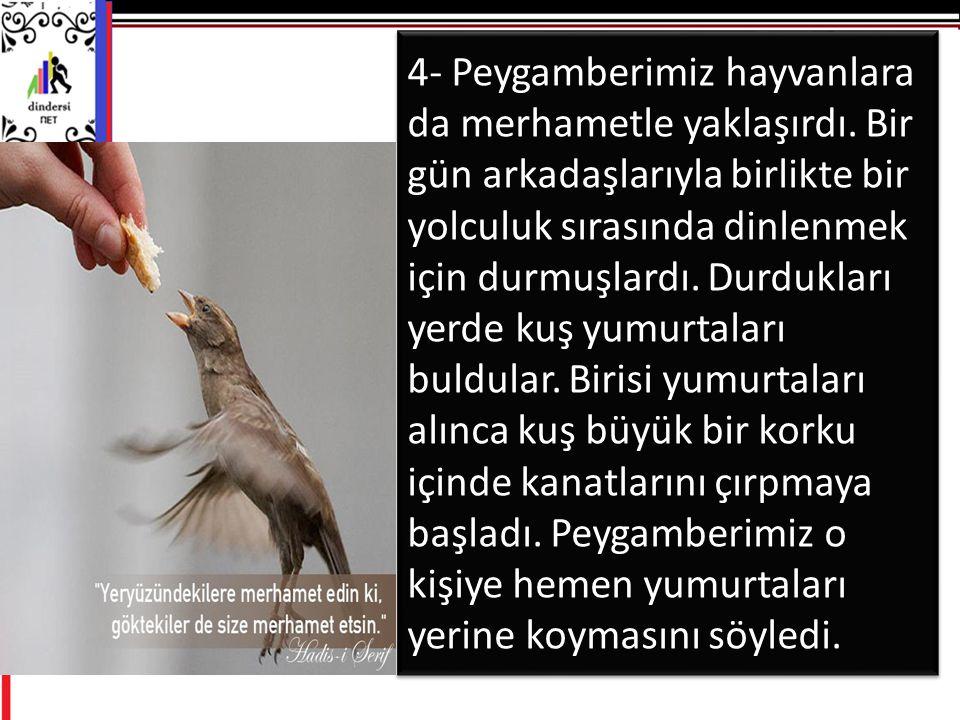 4- Peygamberimiz hayvanlara da merhametle yaklaşırdı
