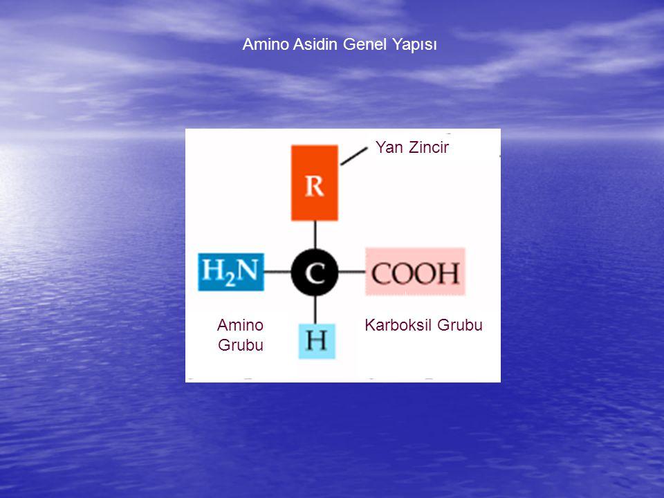 Amino Asidin Genel Yapısı