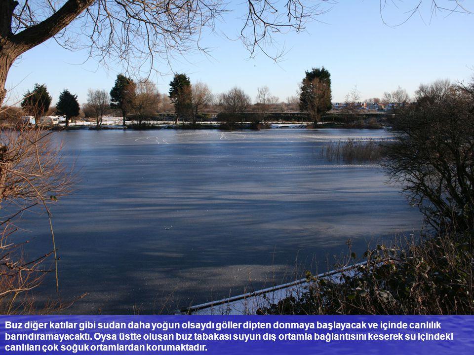 Buz diğer katılar gibi sudan daha yoğun olsaydı göller dipten donmaya başlayacak ve içinde canlılık barındıramayacaktı.