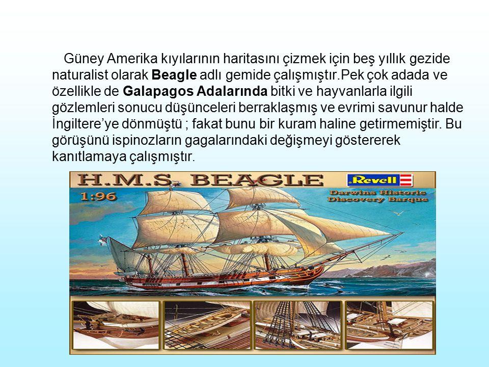 Güney Amerika kıyılarının haritasını çizmek için beş yıllık gezide naturalist olarak Beagle adlı gemide çalışmıştır.Pek çok adada ve özellikle de Galapagos Adalarında bitki ve hayvanlarla ilgili gözlemleri sonucu düşünceleri berraklaşmış ve evrimi savunur halde İngiltere'ye dönmüştü ; fakat bunu bir kuram haline getirmemiştir.