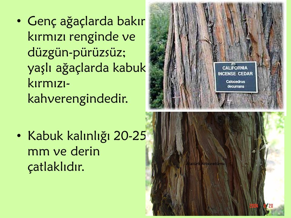 Genç ağaçlarda bakır kırmızı renginde ve düzgün-pürüzsüz; yaşlı ağaçlarda kabuk kırmızı-kahverengindedir.