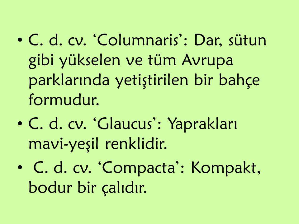 C. d. cv. 'Columnaris': Dar, sütun gibi yükselen ve tüm Avrupa parklarında yetiştirilen bir bahçe formudur.