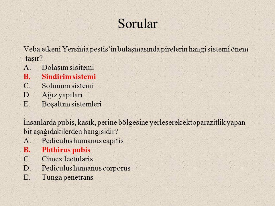 Sorular Veba etkeni Yersinia pestis'in bulaşmasında pirelerin hangi sistemi önem. taşır Dolaşım sisitemi.