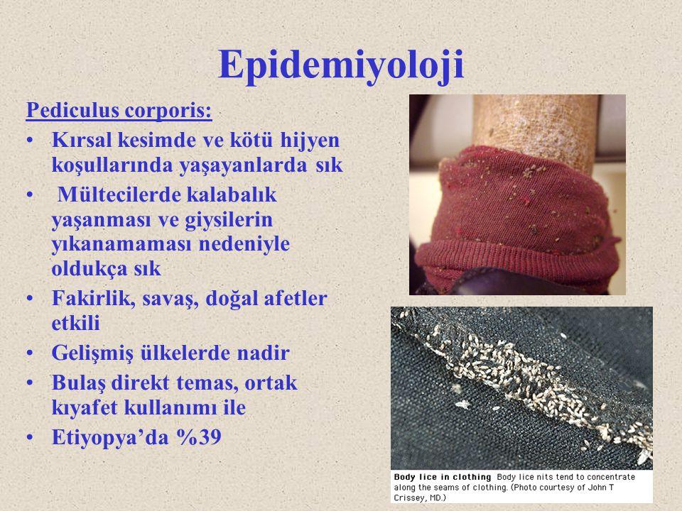 Epidemiyoloji Pediculus corporis: