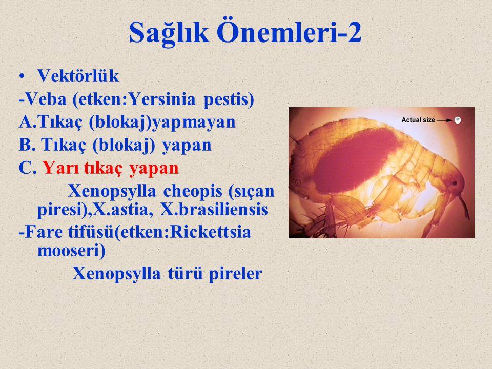 Sağlık Önemleri-2 Vektörlük -Veba (etken:Yersinia pestis)