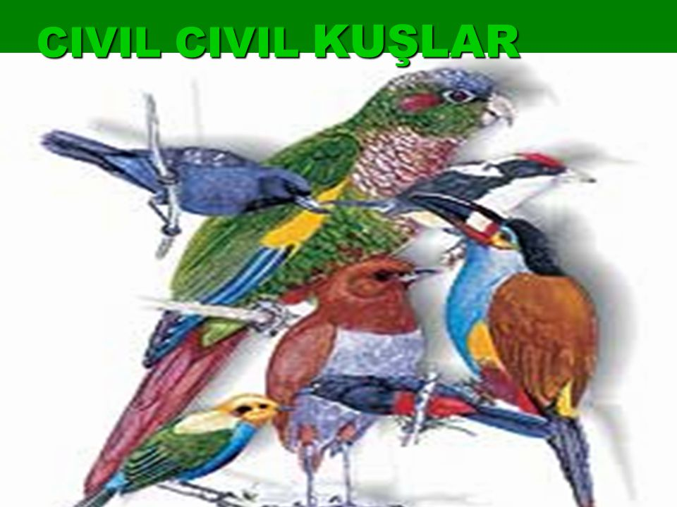 CIVIL CIVIL KUŞLAR