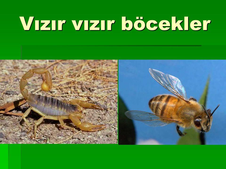 Vızır vızır böcekler
