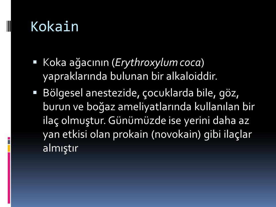 Kokain Koka ağacının (Erythroxylum coca) yapraklarında bulunan bir alkaloiddir.