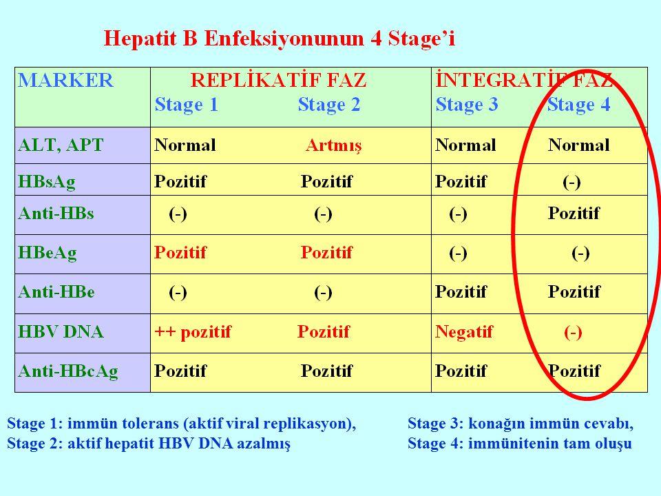 Stage 1: immün tolerans (aktif viral replikasyon),